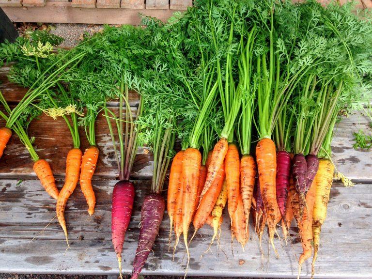 Co warto wysiać? Przegląd roślin i zakup nasion