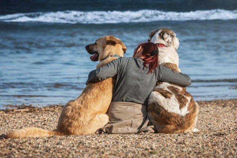 Techniki Surefire do znajdowania sukcesu w posiadaniu psa teraz